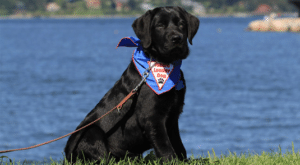 future leader black dog by water