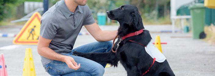dog trainer in street