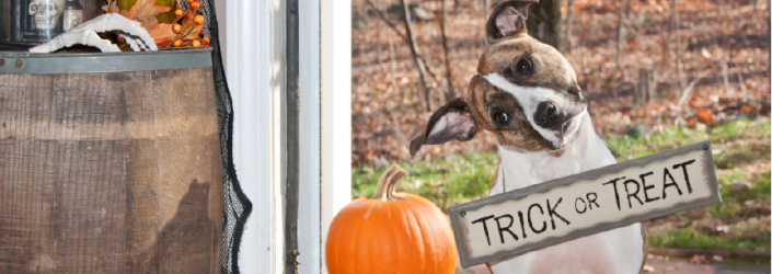 dog with trick or treat sign on him