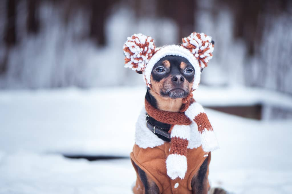 Dog out in cold winter weather