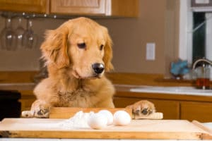 dog baking recipe