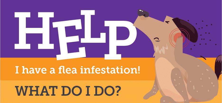 Flea 101
