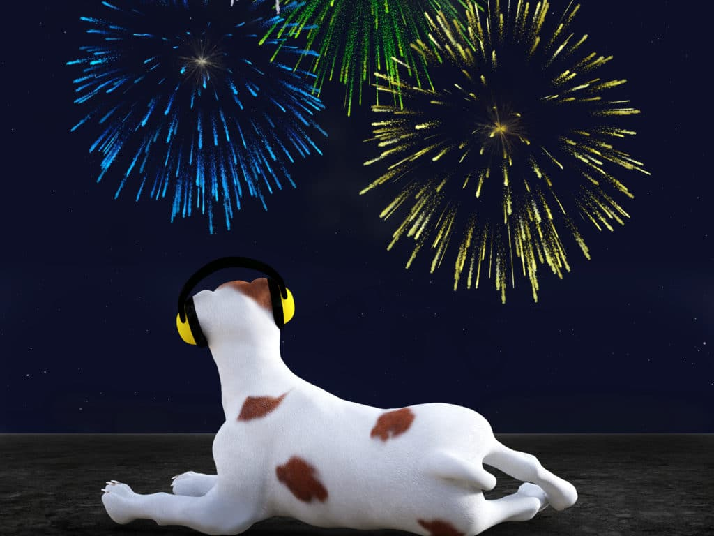 Dog Fireworks and Anxiety