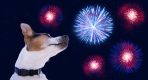 Fireworks and Calming Chews for Dogs